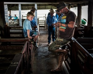 At the Pig and Calf Auction, Warwick, QLD