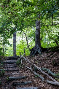 Steps, Beech Forest Trail, Cape Cod
