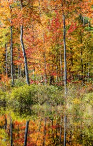 A Wall of Colour, New Hampshire